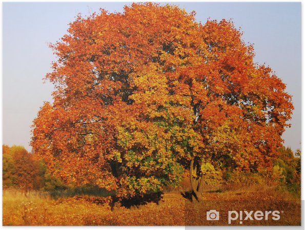 Plakat Farby jesieni - Pory roku