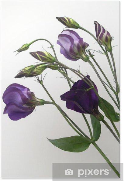 Plakat Fioletowa eustoma lisianthus - Dom i ogród