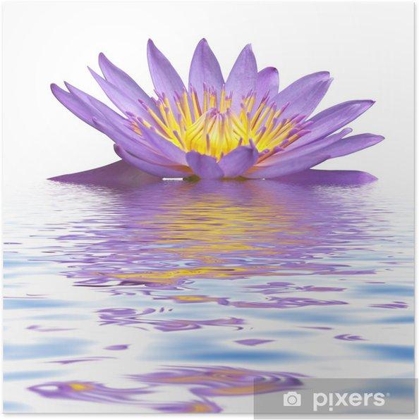 Plakat Fioletowy kwiat lilia wodna -