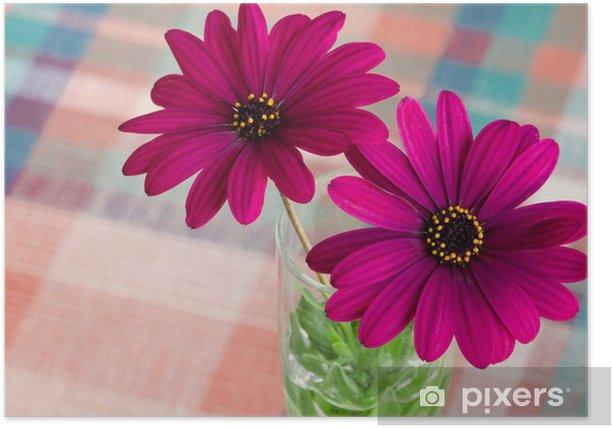 Plakat Fioletowy kwiat stokrotka - Kwiaty