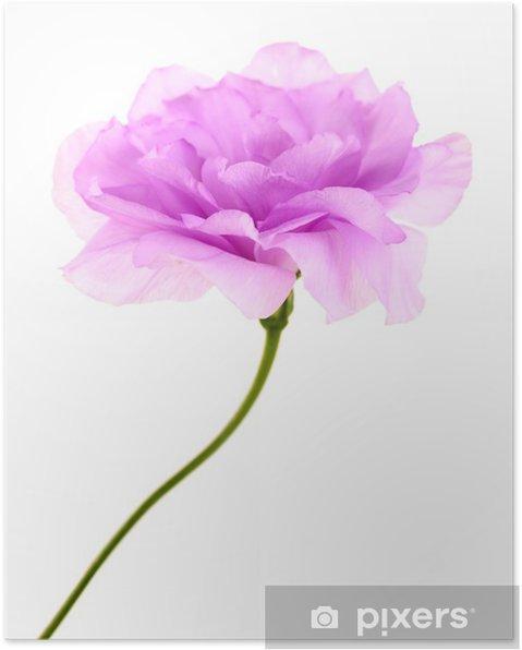 Plakat Fioletowy sztuczny eustoma na białym - Kwiaty