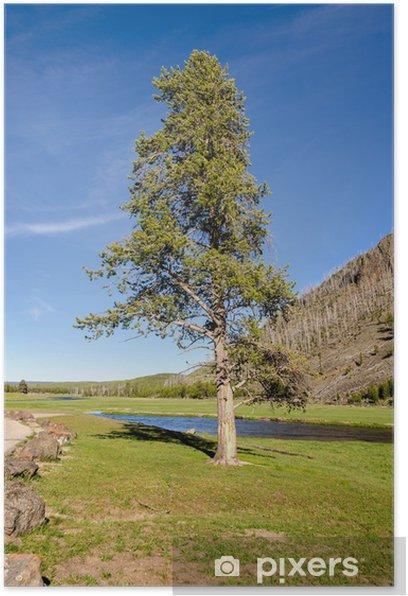 Plakat Fiume nello Park Narodowy Yellowstone w Wyoming - Woda