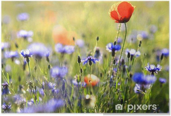 Plakat Fleurs des champs - Kwiaty