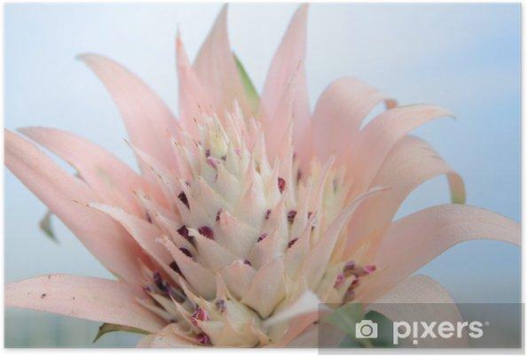 Plakát Flor de planta crasa - Evropa