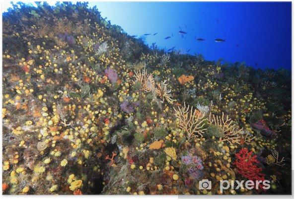 Plakát Fondale subacqueo mediterraneo - Podvodní svět