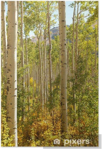 Plakat Forest of Osiki - Pory roku