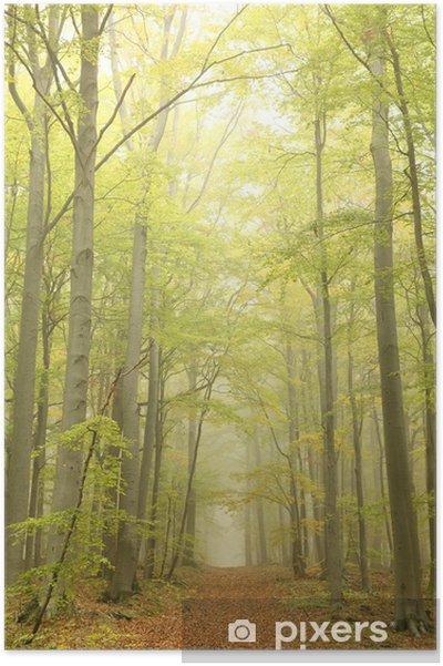 Plakát Forest stezka obklopen buků v mlhavé podzimní ráno - Témata