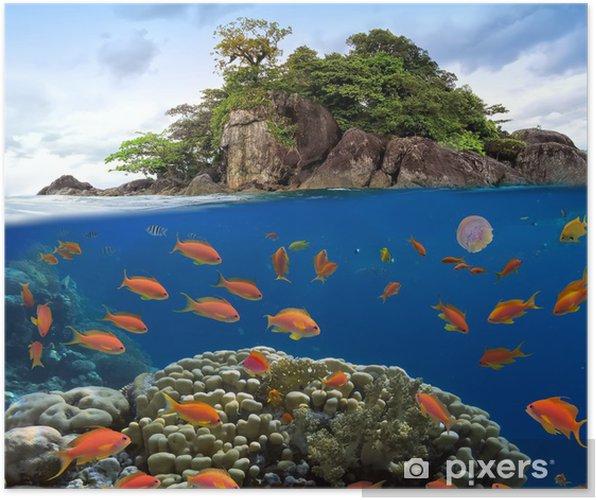 Plakát Fotografie z korálového kolonie na útesu nad - Vodní a mořský život