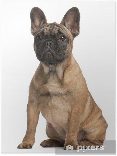 038b4b53013 Plakát Francouzský buldoček štěně