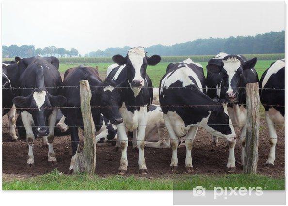 Plakát Fríský dobytek - Zemědělství