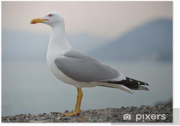 Plakat Gabbiano - Ptaki