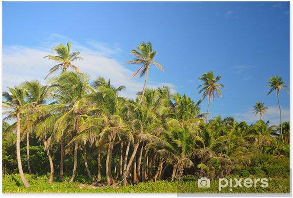 Plakat Gaj z palmami - Palmy