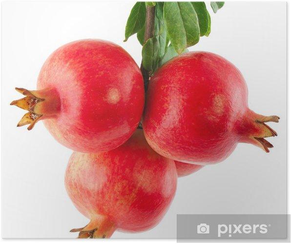 Plakat Gałąź drzewa granatu z owoców i liści - Owoce
