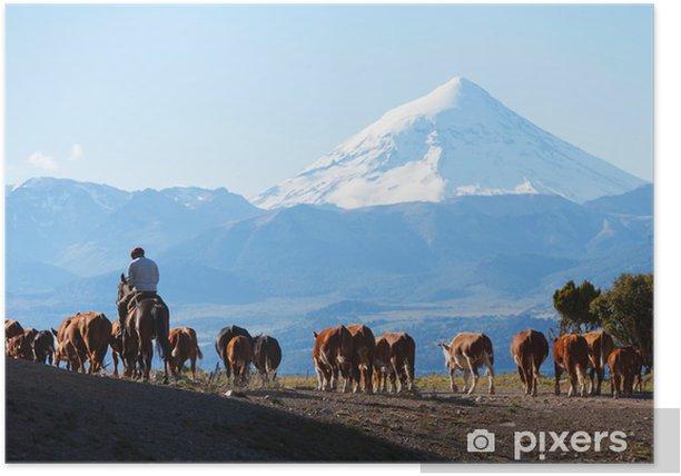 Plakat Gauchos i stada krów na tle wulkan Lanin - Ameryka