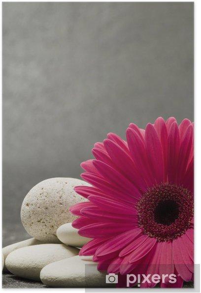 Plakat Gerbera Różowy - Kwiaty