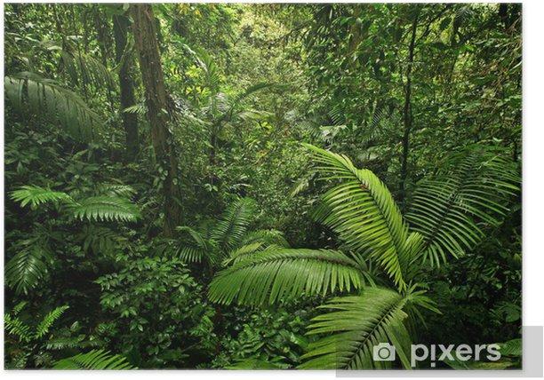 Plakat Gęsty tropikalny las deszczowy - Przeznaczenia
