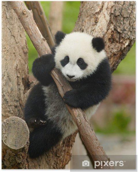 Plakat Giant Baby Panda na drzewie - Tematy