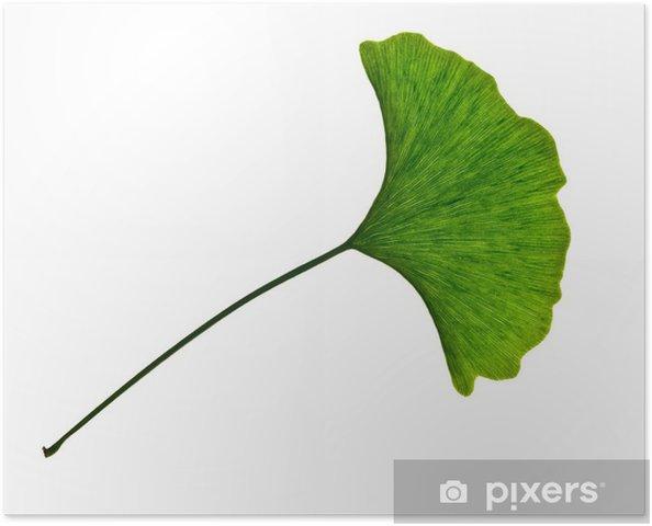 Plakat Ginkgo biloba, Pielęgnacja i dobre samopoczucie - Zdrowie i medycyna