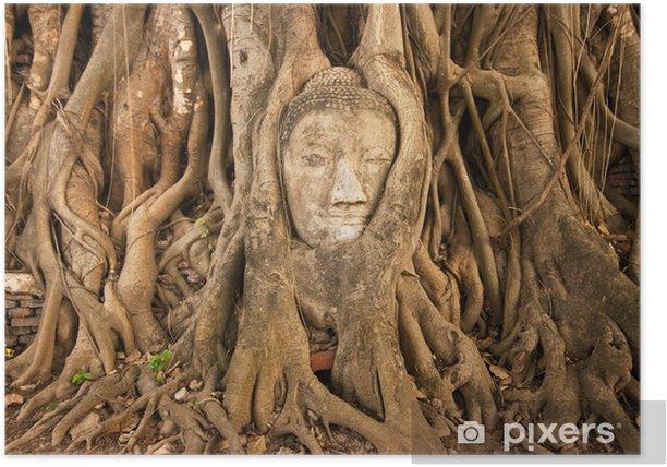Plakat Głowa Buddy w drzewie, Tajlandii na Watmahathat - Azja
