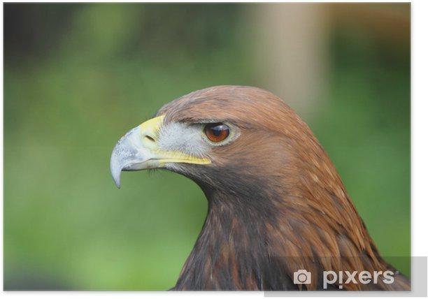 Plakát Golden Eagle - Témata