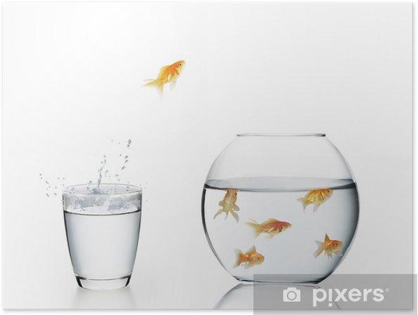 Plakat Goldfish skoków się z wody - Zwierzęta żyjące pod wodą