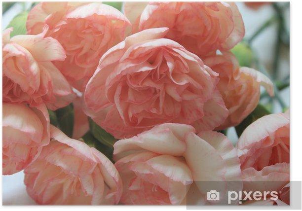 Plakat Goździk - Kwiaty