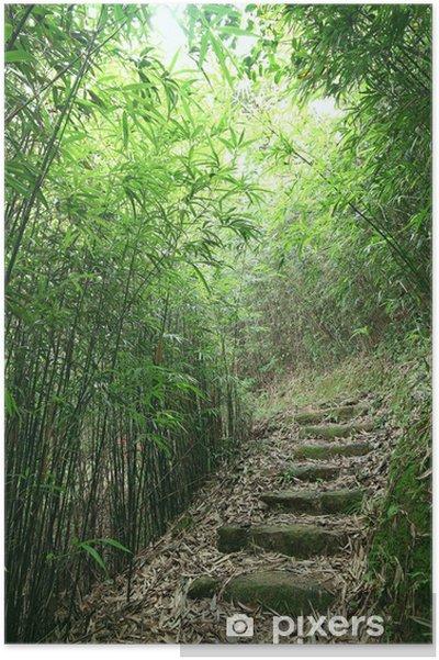 Plakat Green Bamboo Forest - ścieżka prowadzi przez bujny las bambusowy - Pejzaż miejski