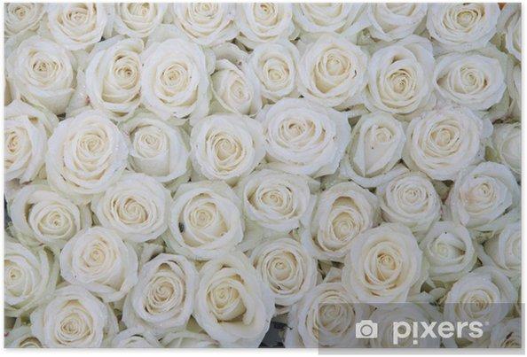 Plakat Grupa białych róż po natryskiem - Tematy