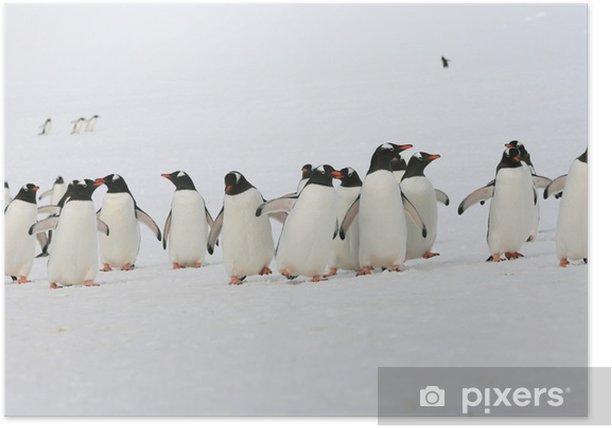 Plakat Grupa pingwinów na Antarktydzie - Ptaki