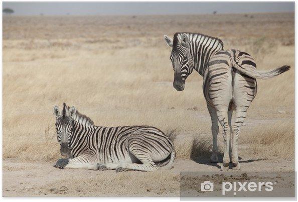 Plakat Grupa Zebra - Tematy