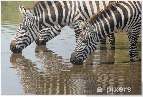 Plakat Grupa zebry picia - Tematy