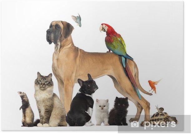Plakat Grupa zwierząt - psów, kotów, ptaków, gadów, królik, ... - Ssaki