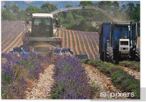 Plakat Harvest of lavender - Rolnictwo