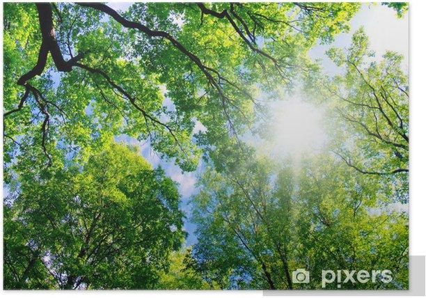 Plakat Hight Letni Krajobraz Las - Rośliny