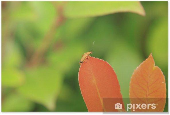 Plakát Hmyzu na listu oranžová oranžová - Roční období