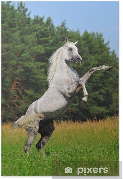 Plakat Hodowli koni arab - Ssaki