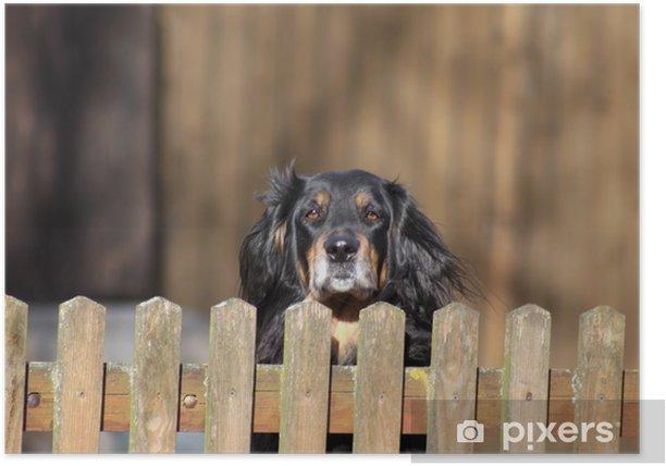 Plakat Hofhund - Ssaki