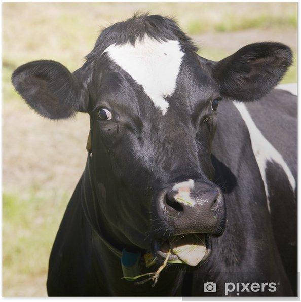 Plakat Holenderskie krowy - Ssaki