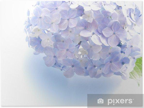 Plakat Hortensja - Kwiaty
