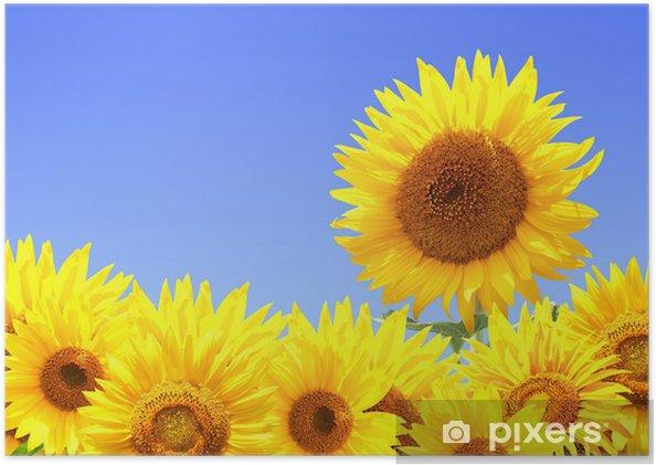 Plakát Hranice s slunečnic - Témata