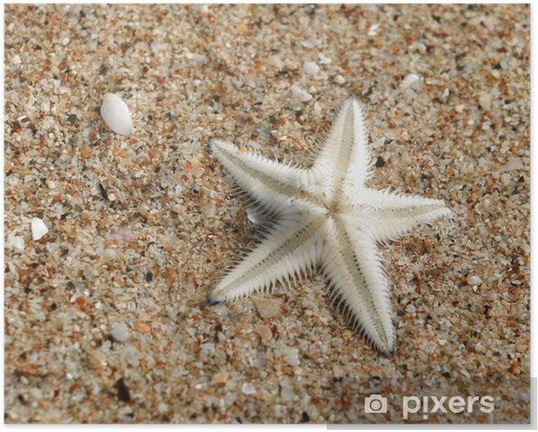 Plakát Hvězdice na pláži v Thajsku - Asie