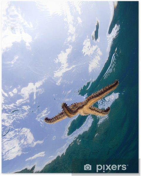 Plakát Hvězdice v moři - Vodní a mořský život