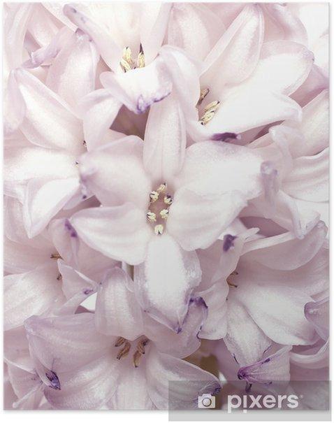 Plakát Hyacint - Témata