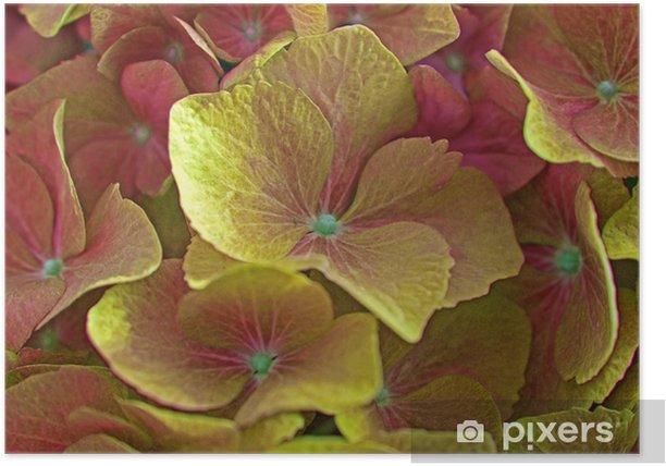 Plakát Hydrangea květiny - Květiny