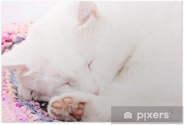 Plakat Idealnie Biały Kot śpi Pixers żyjemy By Zmieniać