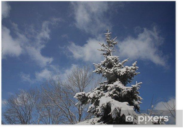 Plakat Iglica z jodły - Drzewa