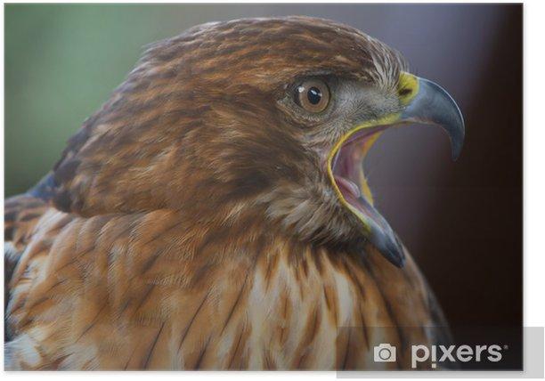 Plakat Imperial Eagle - Ptaki