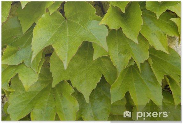 Plakat Ivy-113 - Pory roku
