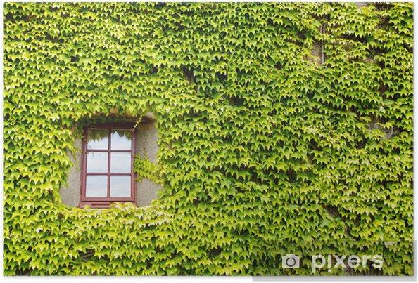 Plakat Ivy pokryte ściany, okna - Dom i ogród