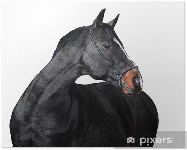 Plakát Izolované kůň na bílém pozadí - Nálepka na stěny